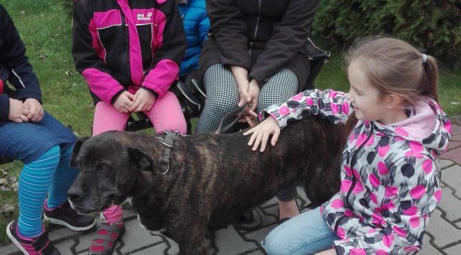 Święcenie zwierząt i ich opiekunów